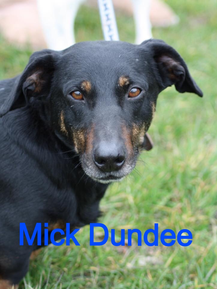 Mick Dundee ON TRIAL with a view to adoption