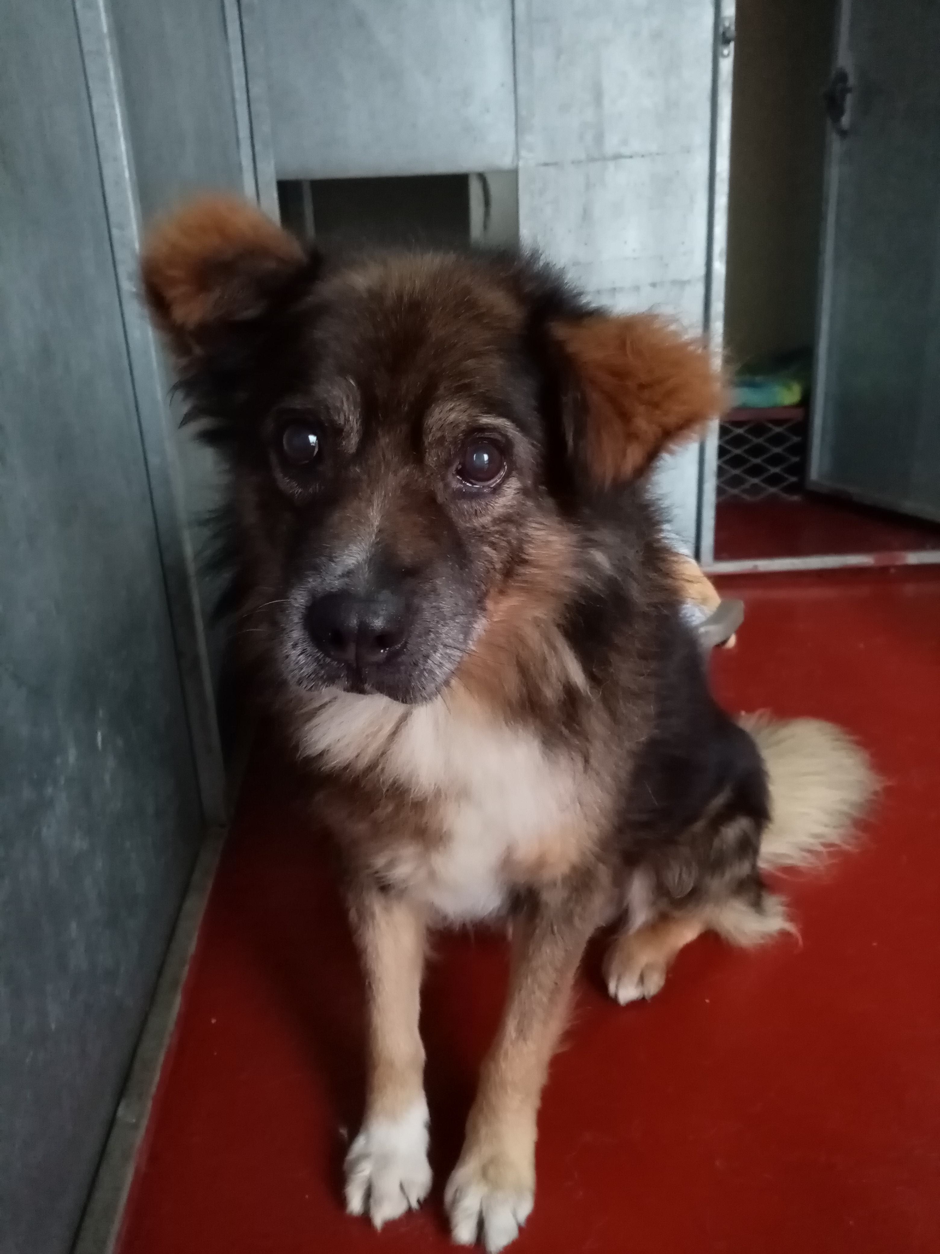 Roman  QUIET WARM HOME WITH GARDEN NEEDED FOR THIS OLDER LAD