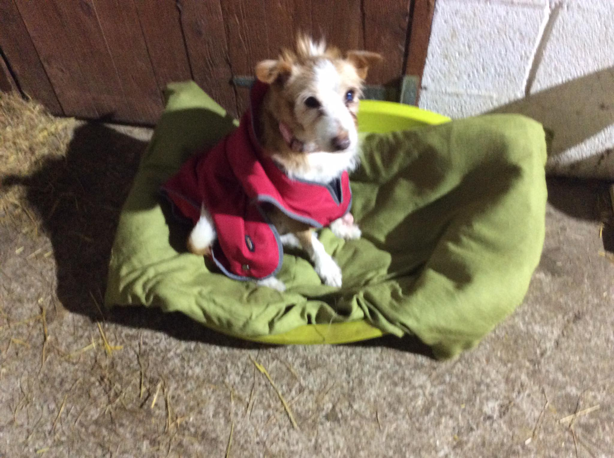Marly -URGENT warm home needed