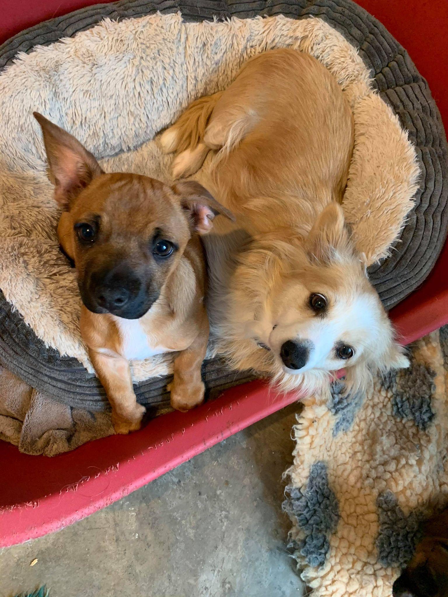 Bobo puppy ( left photo)